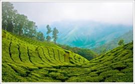 Kerala-Tour